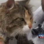 Kansas cat is back home after stowaway trip to Hawaii