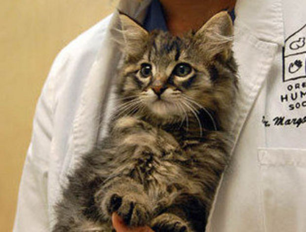 Kitten is on the mend after being shot and tossed in dumpster