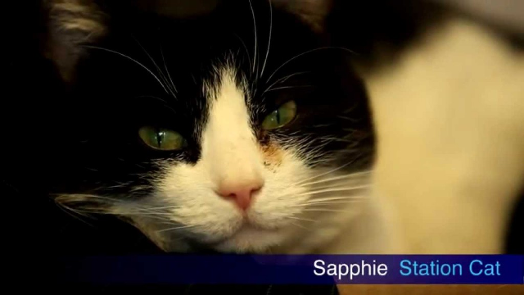 """STATION CAT 'SAPPHIE' STARS IN """"A TAIL FROM TONBRIDGE"""""""
