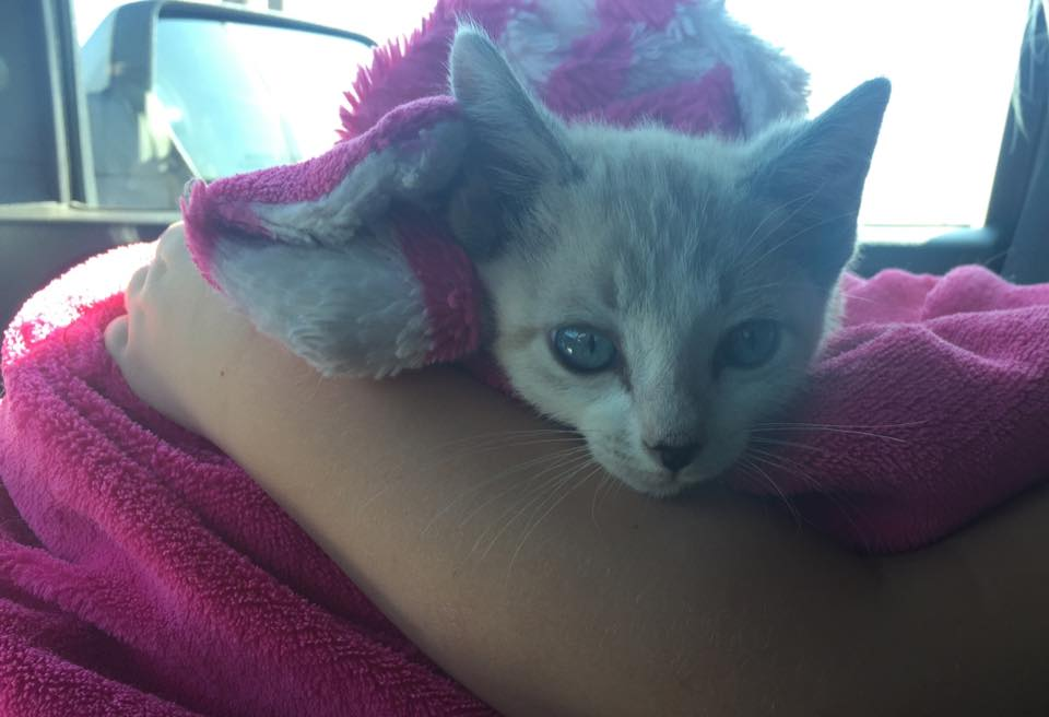 Texas kitten thrown in abuse video is miraculously unharmed