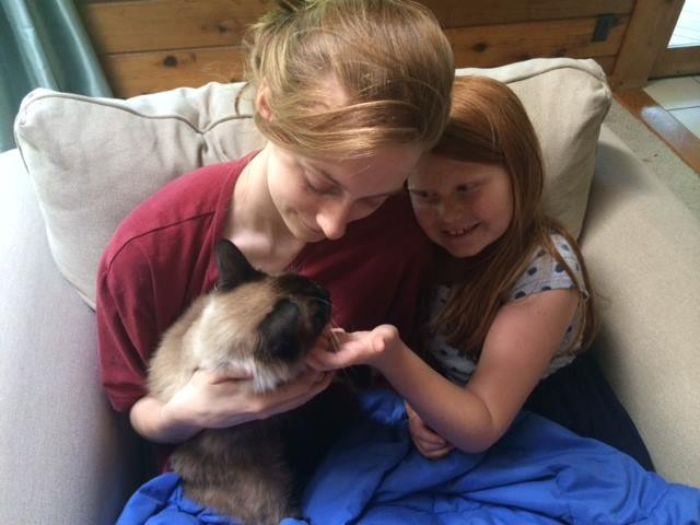 Missing cat reunited with family 1 year and 4,000 miles later