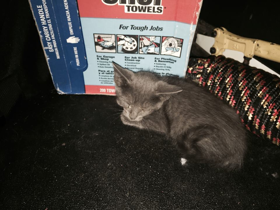 Kitten is saved from dangerous highway in early morning rescue
