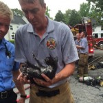 Cat rescued from fire caused by fireworks