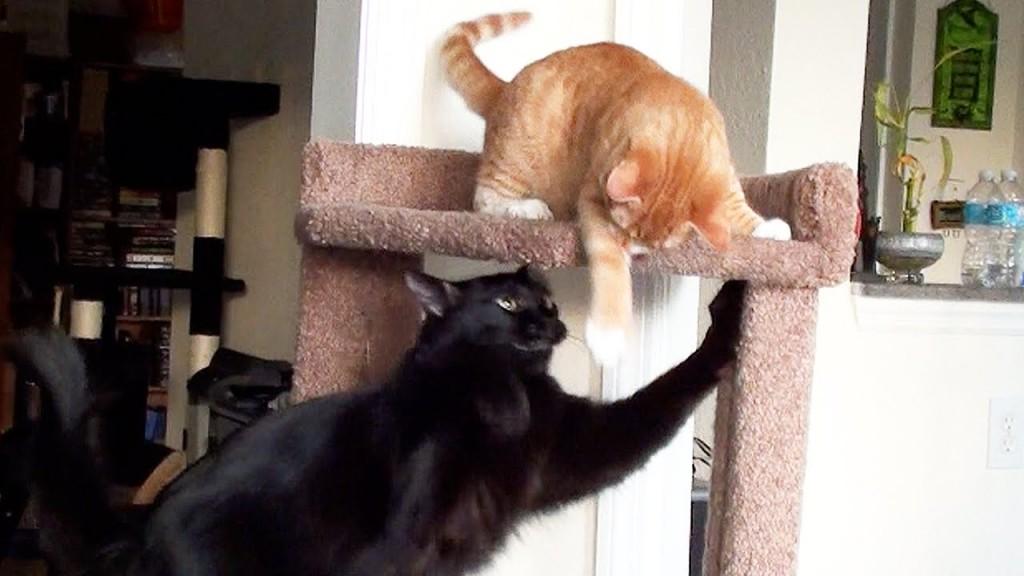 Cat vs Kitten – Cat Tree Battle!