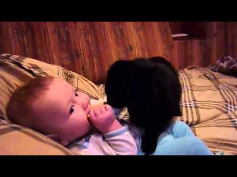 Cat wants baby's cookie