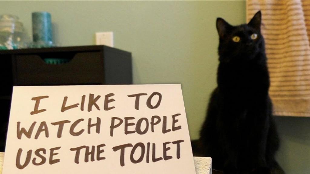 Cole & Marmalade: Ultimate Cat Shaming!