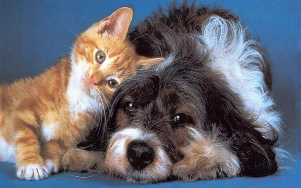 Spanish town grants rights and elevated status to cats and dogs