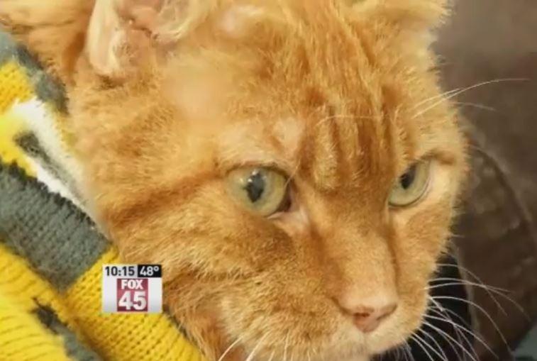 Tony the Hero Fire Cat