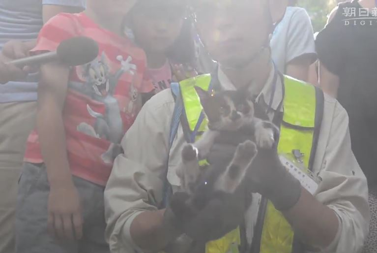 Kitten is rescued from Tokyo overpass in large-scale effort