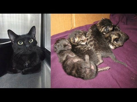 Kami & Her Kittens