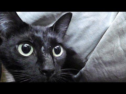 Kami The Kitten-napping Mama Cat