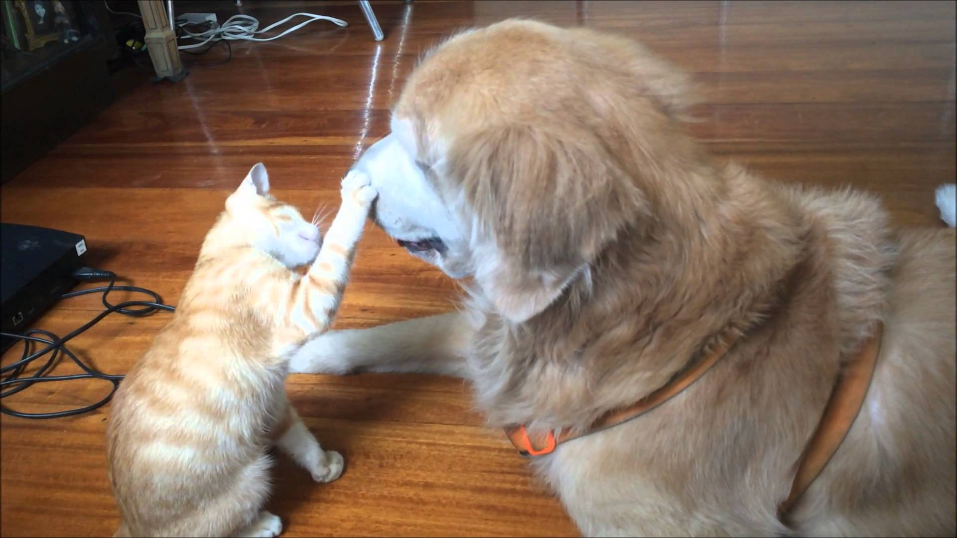 How To Introduce Big Dogs To Cats