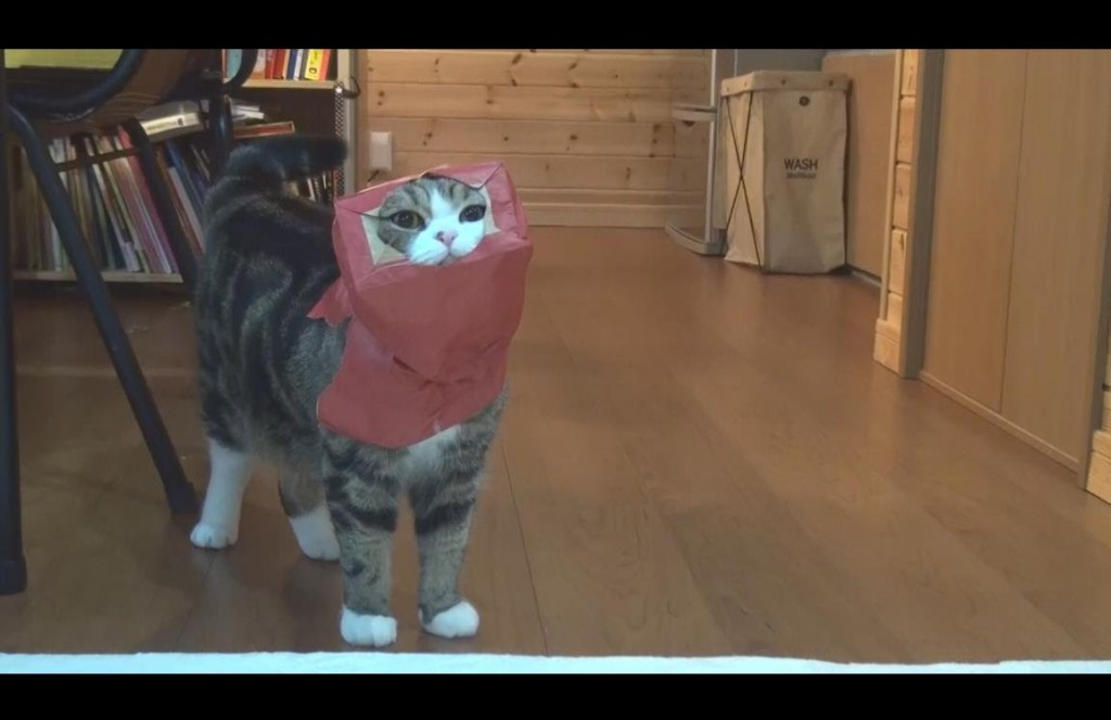 Red paper bag and Maru 2