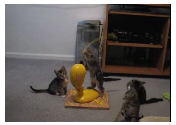 Kittens get a new toy