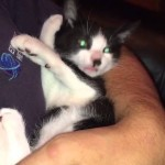 Sleeping, purring kitten gets an offer worth waking up for