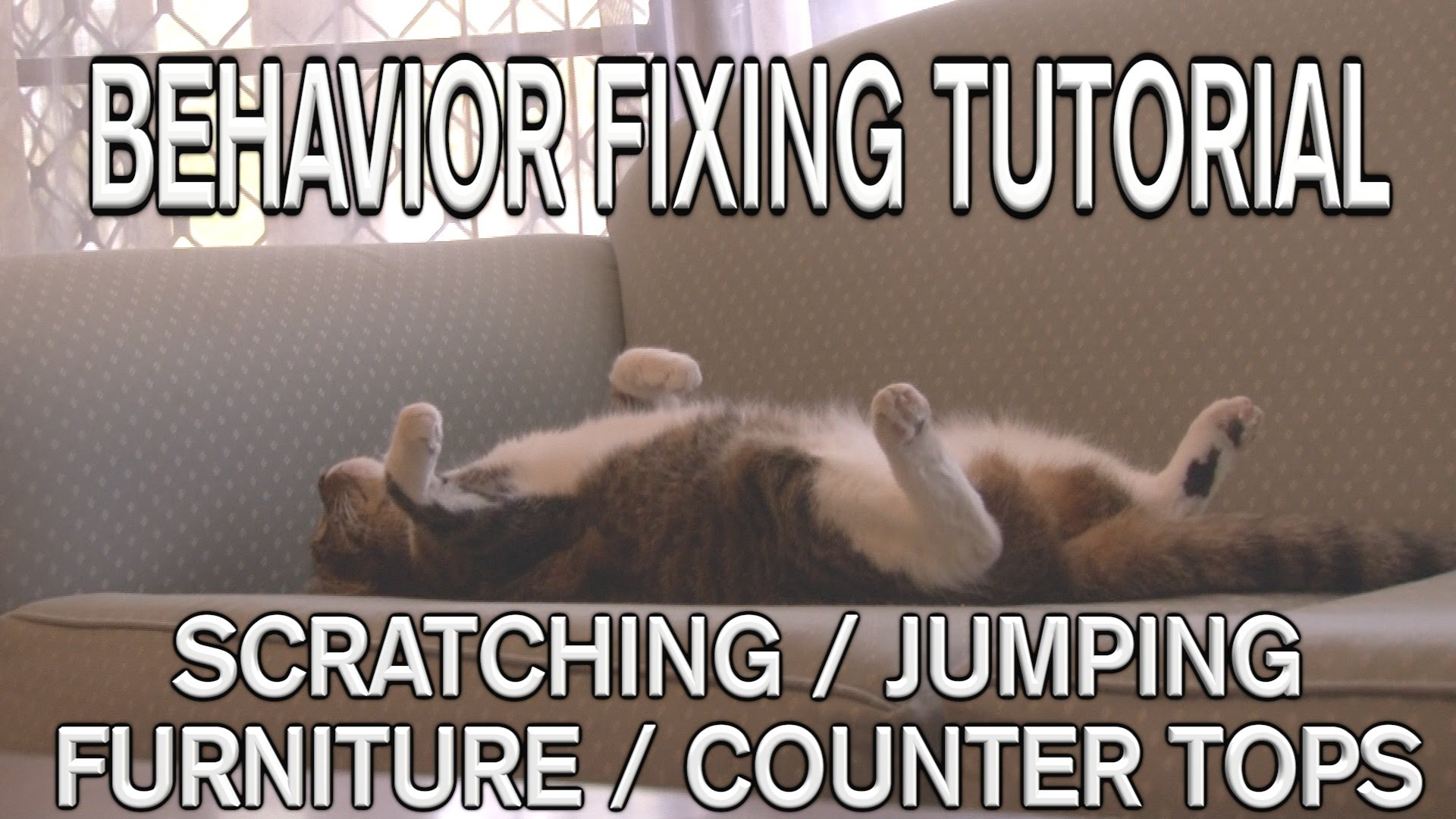 Stop Cats Scratching Jumping On Furniture Life With Cats