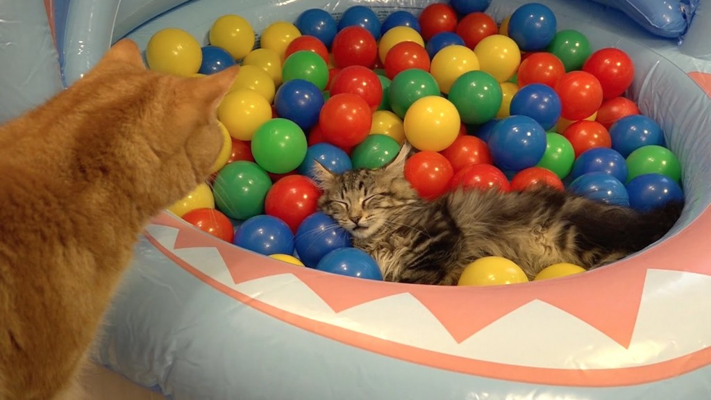 10 Cats playing in a pool of colorful balls