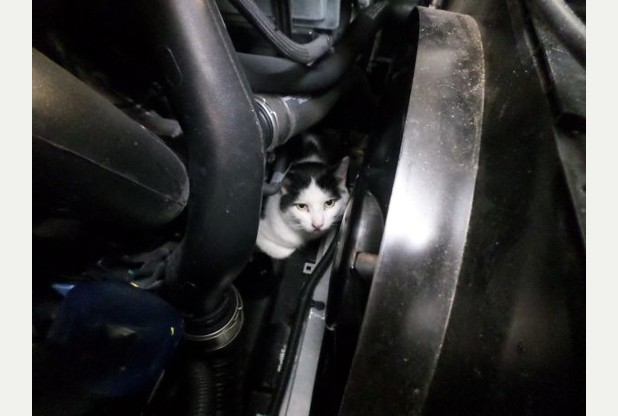 Cat survives 150-mile journey after being trapped in engine