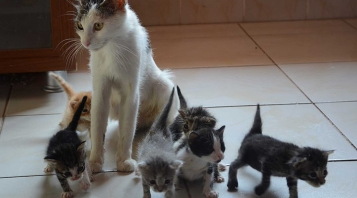 Box of kittens almost killed by Turkish police wary of it of being a bomb