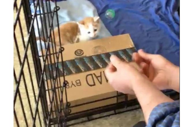 Kitten Jumps into Man's Hands