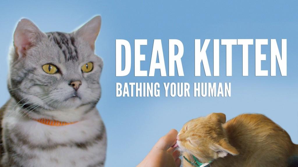 Dear Kitten: Bathing Your Human
