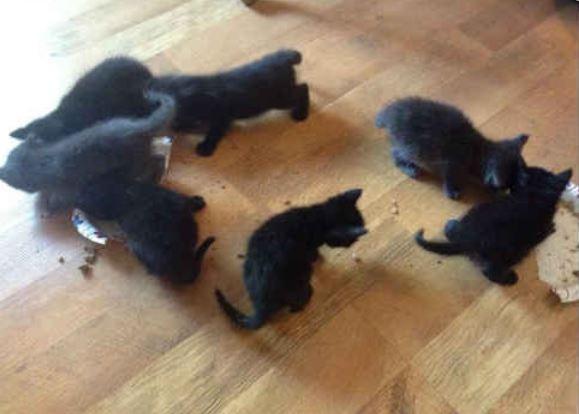 Police officer rescues litter of kittens