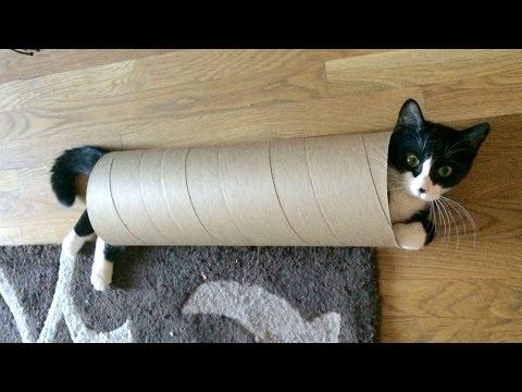 Kitten Sliding Through a Tube