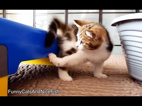 Oliver kitten chases his tail