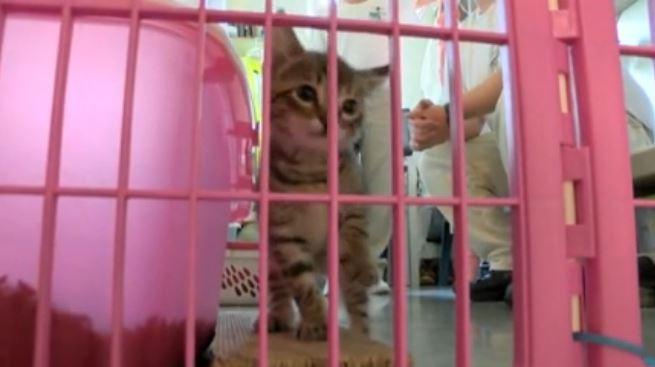 Inmates bottle feed foster kittens in prison program