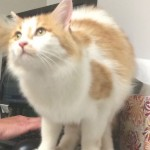 Mikey the cat is missing at San Diego airport