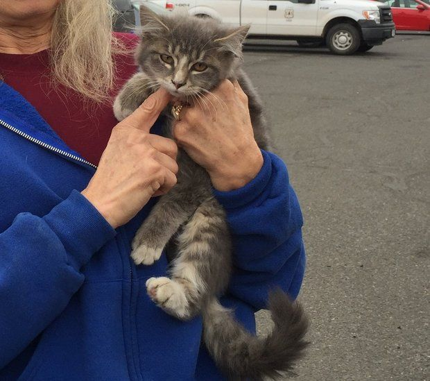 Rescued kitten becomes firefighters' base camp mascot