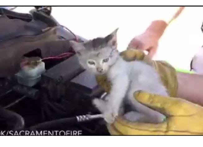 Firefighters rescue trapped kitten