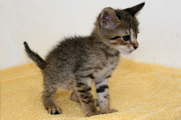 Spanish stowaway kitten to find new home in the UK