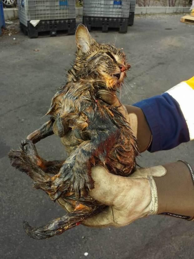 Garbagemen Save Kitten From Trip To Incinerator Life