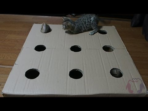 Bengal kittens play whack-a-mole