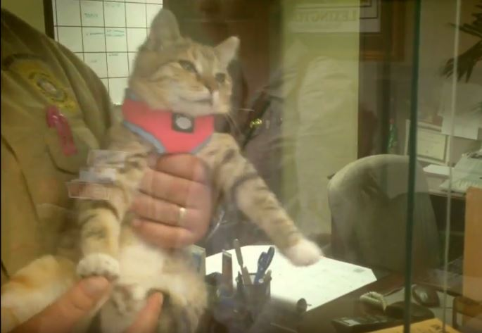 Coroner fights to keep office therapy cat