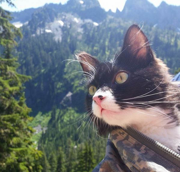 Paddy, the cat who loves to hike