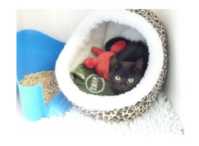 Kitten is rescued from Starbucks dumpster
