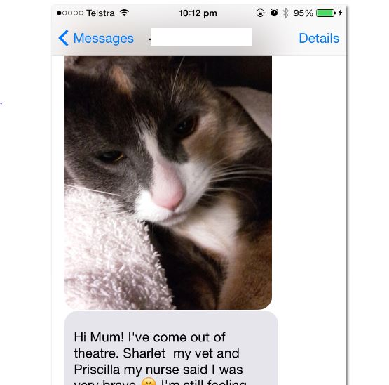Thoughtful kitty sends text from vet clinic