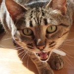 Help! My Cat Wakes Me Up To Eat