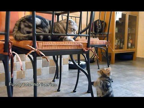 Kitten wants attention from Cat