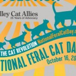 National Feral Cat Day is less than a month away!