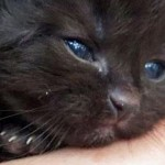 Teens save 2 week old kitten floating toward the sea on a log