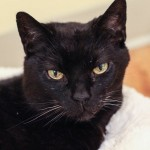 17 year old cat Kitty's incredible journey