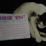 Missing cat reunited with family after fatal crash