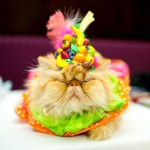42 Cats Who May, or May Not, Like Costumes