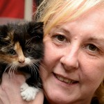Kitten survives week in car engine and finds  a home