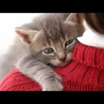 'Cute Cats Love Hugging' Compilation