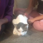 RIP Ralph: Cat reunited with family after 14 years has died
