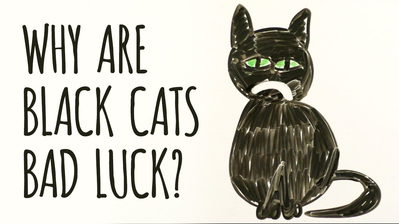 Why Are Black Cats Considered Bad Luck Life With Cats